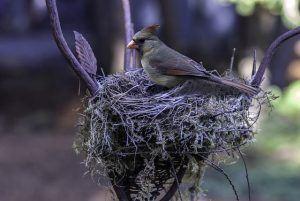 bird-985603_640